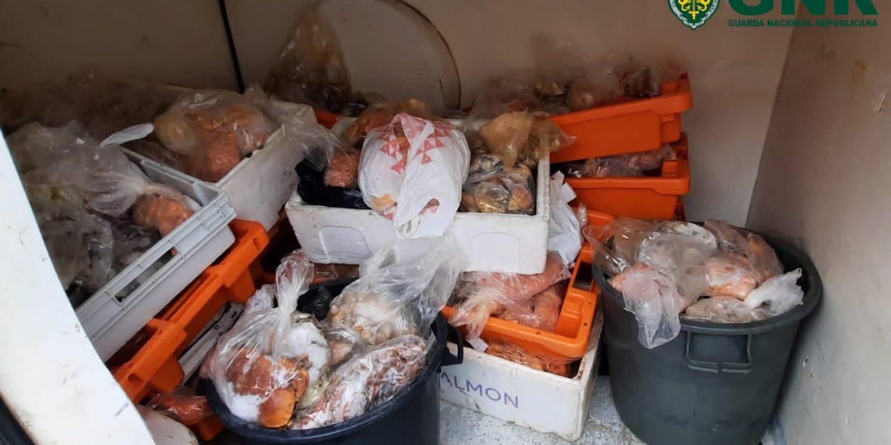 Ílhavo – Apreensão de 230 quilos de marisco e pescado diverso