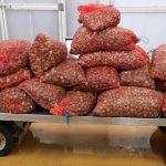 Aveiro – Apreensão de 632 quilos de bivalves em situação irregular