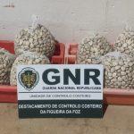 Nazaré – Apreensão de 103 quilos de bivalves
