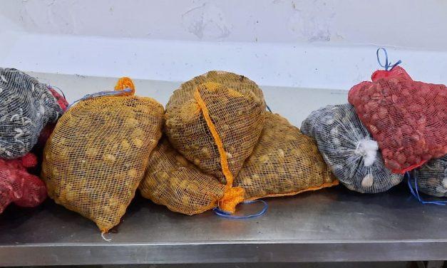 Aveiro – Apreensão de 274 quilos de bivalves em situação irregular
