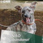 GNR/SEPNA – Dia Internacional do Animal Abandonado