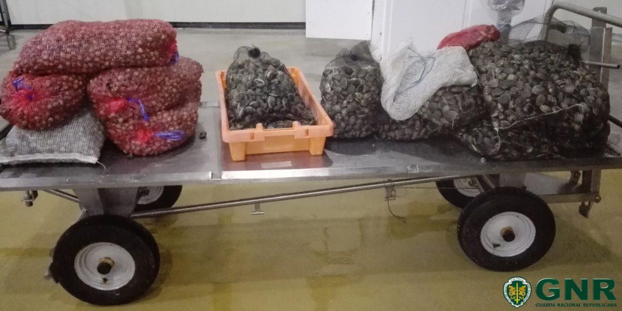 Estarreja – Apreensão de mais de 200 quilos de bivalves